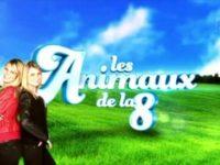 « Les animaux du grand 8 » : JAFAR du Royaume d'Exquise en direct sur D8