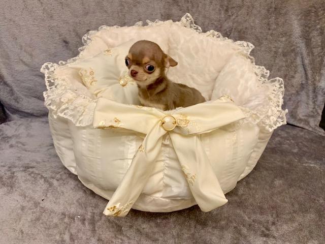 Couchage pour Chihuahua et Poméranien